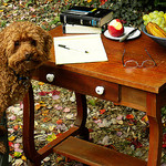 dog_at_writing_table_social_media_advice_for_nonprofit_board