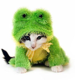 Kitten dressed up in a green frog custom